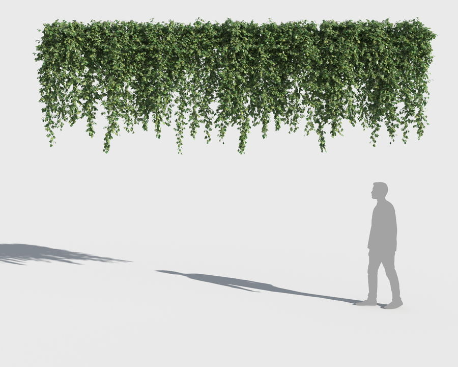 Colección de plantas trepadoras (+ GrowFX) royalty-free modelo 3d - Preview no. 10