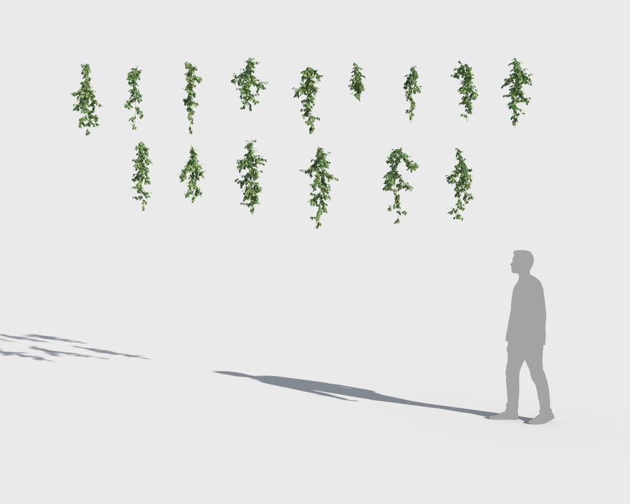 Коллекция вьющихся растений royalty-free 3d model - Preview no. 5