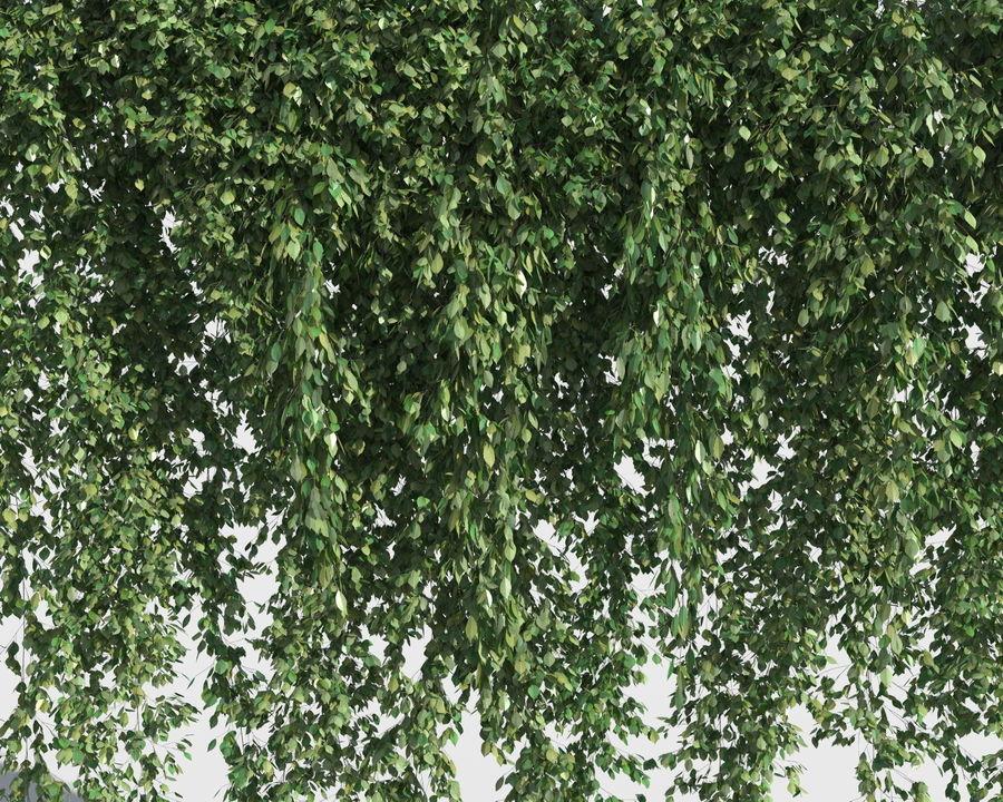 Colección de plantas trepadoras (+ GrowFX) royalty-free modelo 3d - Preview no. 4