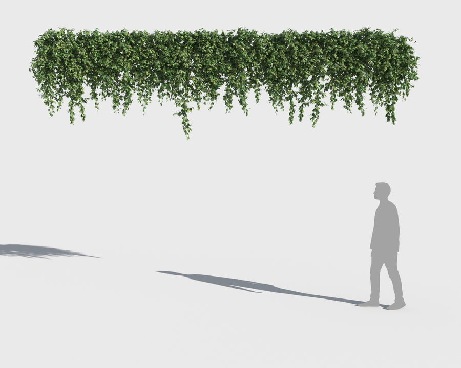 攀援植物系列(+ GrowFX) royalty-free 3d model - Preview no. 8