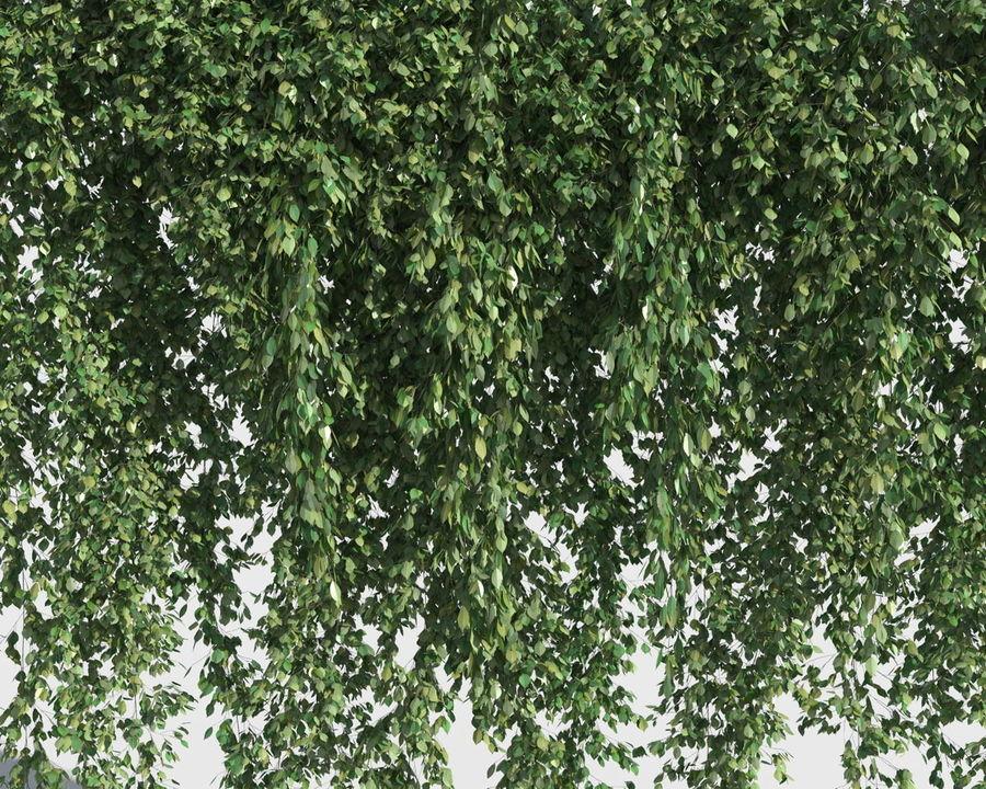 Коллекция вьющихся растений royalty-free 3d model - Preview no. 4