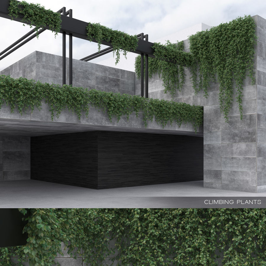 Climbing Plants Collection (+GrowFX) royalty-free 3d model - Preview no. 1