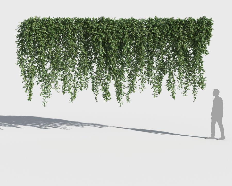Коллекция вьющихся растений royalty-free 3d model - Preview no. 12