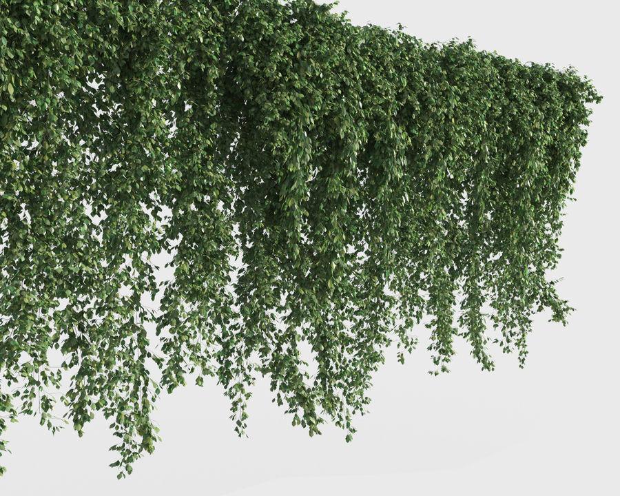 Colección de plantas trepadoras (+ GrowFX) royalty-free modelo 3d - Preview no. 3