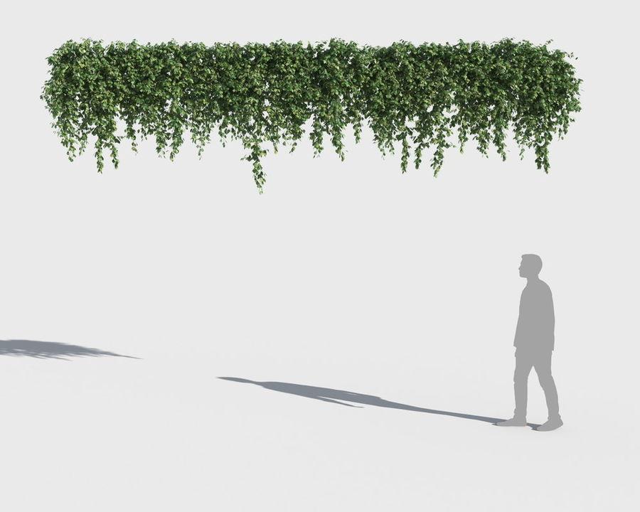 Коллекция вьющихся растений royalty-free 3d model - Preview no. 8