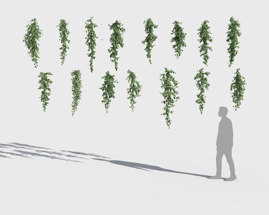 Коллекция вьющихся растений royalty-free 3d model - Preview no. 7