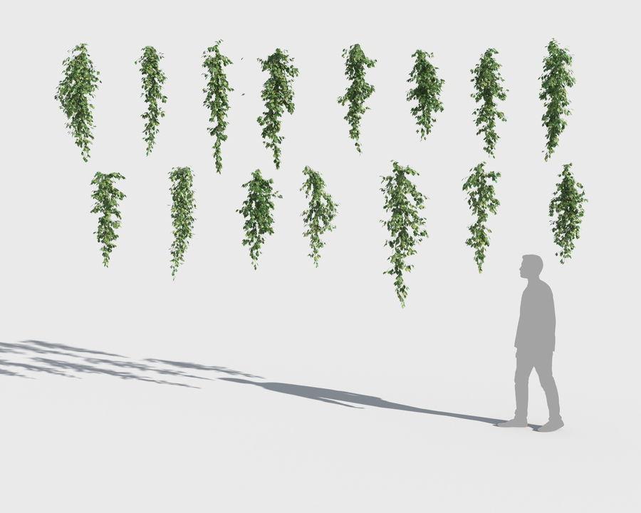 Colección de plantas trepadoras (+ GrowFX) royalty-free modelo 3d - Preview no. 7