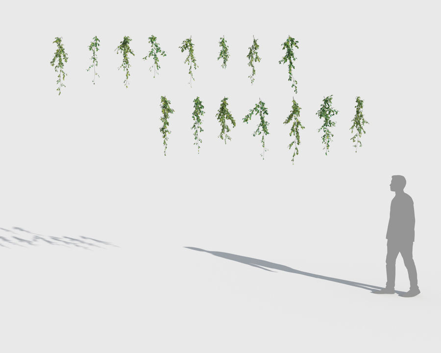 Коллекция Скалолазных Растений (+ GrowFX) 2 royalty-free 3d model - Preview no. 5