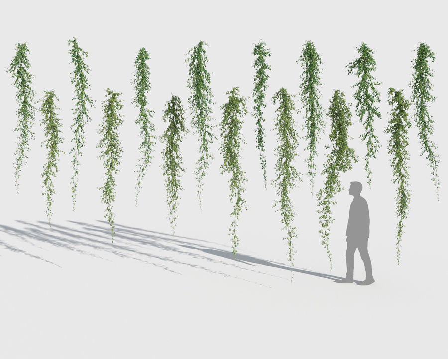 Climbing Plants Collection (+GrowFX) 2 royalty-free 3d model - Preview no. 11