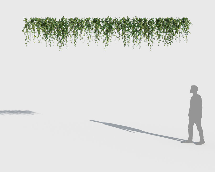 Climbing Plants Collection (+GrowFX) 2 royalty-free 3d model - Preview no. 6