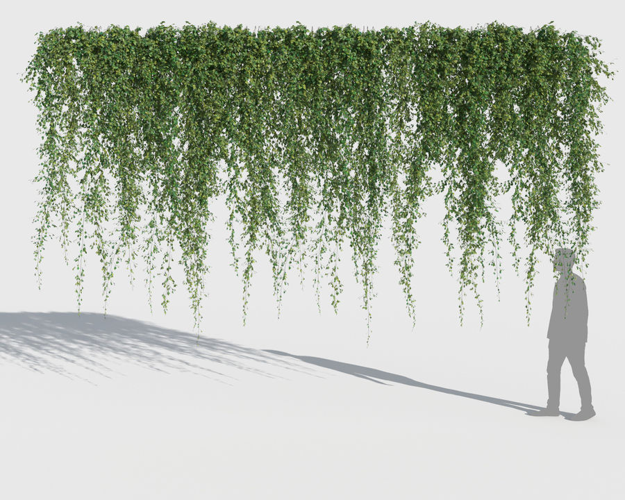 Climbing Plants Collection (+GrowFX) 2 royalty-free 3d model - Preview no. 12