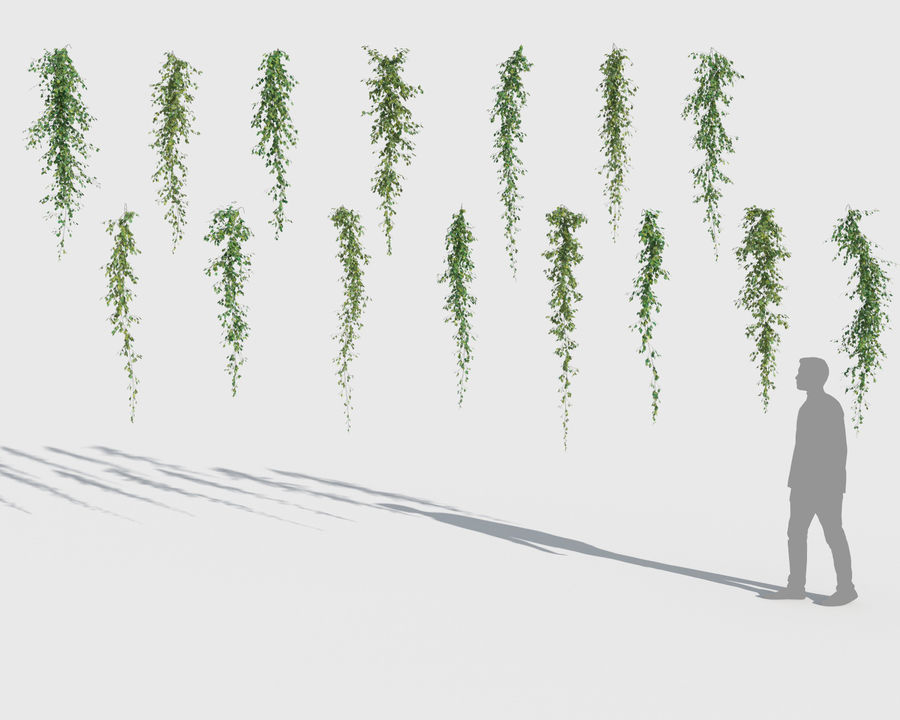 Climbing Plants Collection (+GrowFX) 2 royalty-free 3d model - Preview no. 9