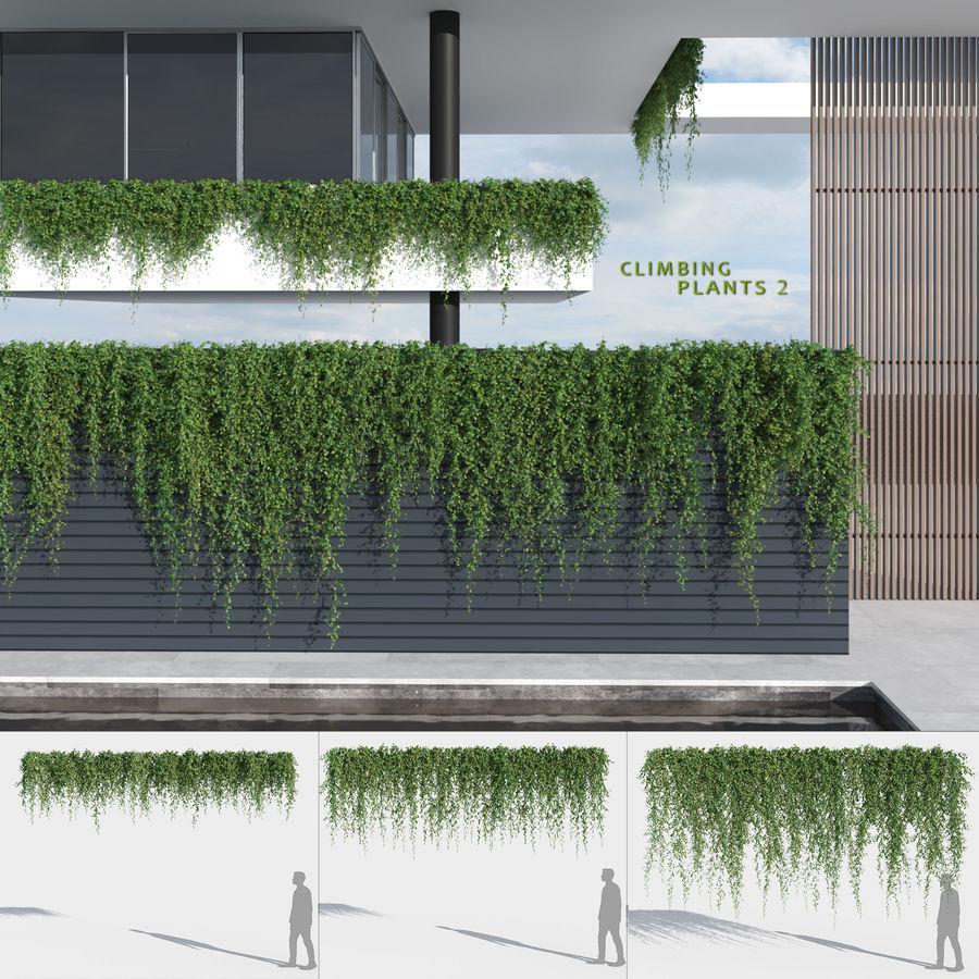 Climbing Plant 3D model | CGTrader