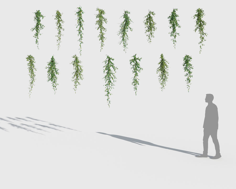 Climbing Plants Collection (+GrowFX) 2 royalty-free 3d model - Preview no. 7