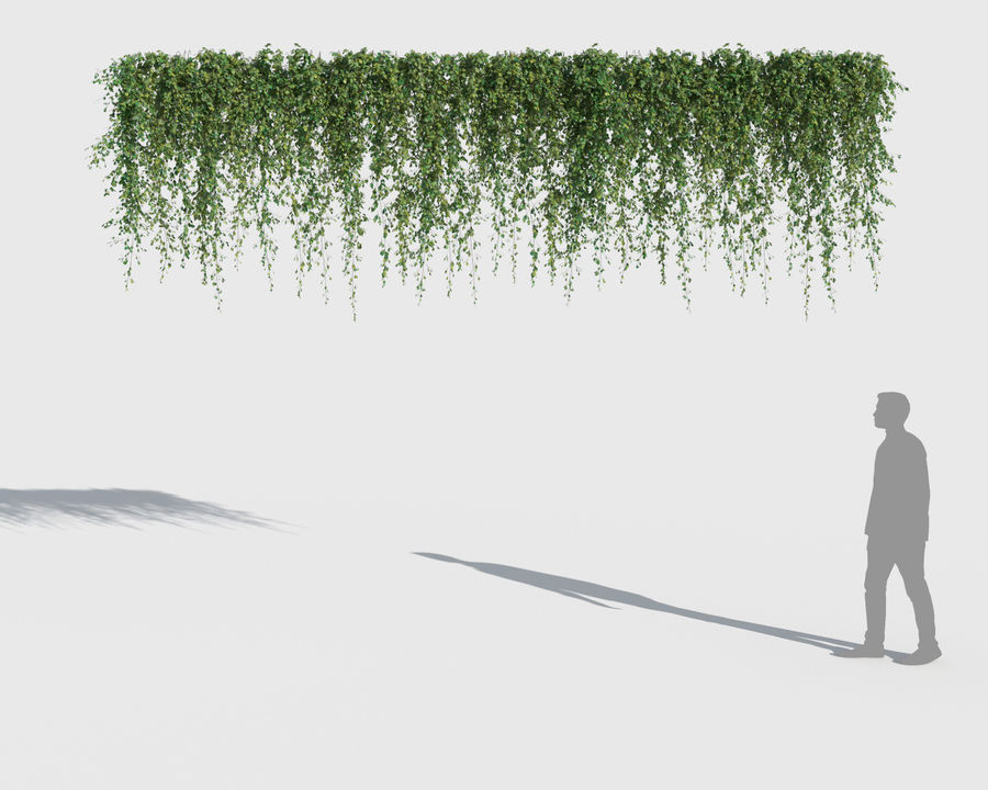 Climbing Plants Collection (+GrowFX) 2 royalty-free 3d model - Preview no. 10