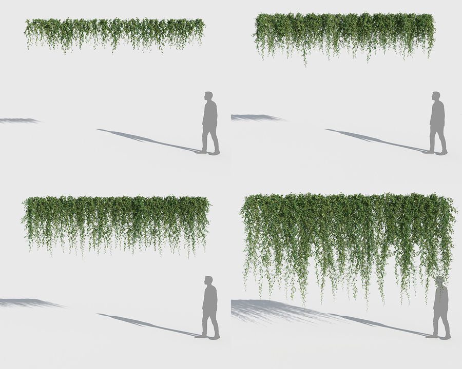 Climbing Plants Collection (+GrowFX) 2 royalty-free 3d model - Preview no. 4