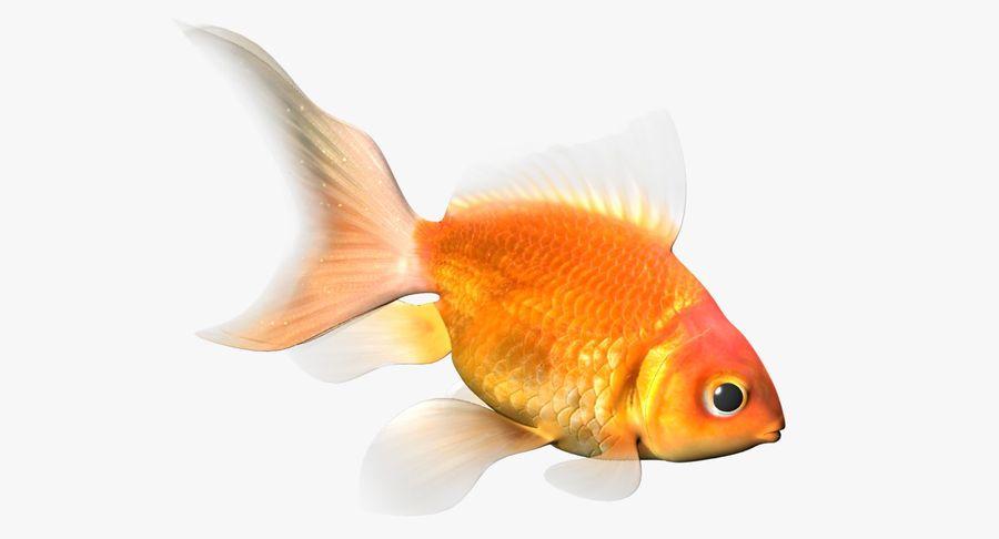 Gold Fish 3D Model Royalty Free 3d
