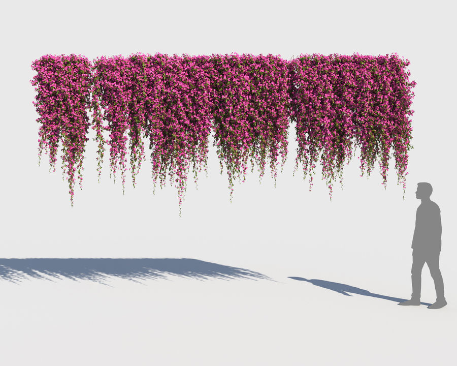 Climbing Bougainvillea Collection (+GrowFx) royalty-free 3d model - Preview no. 11