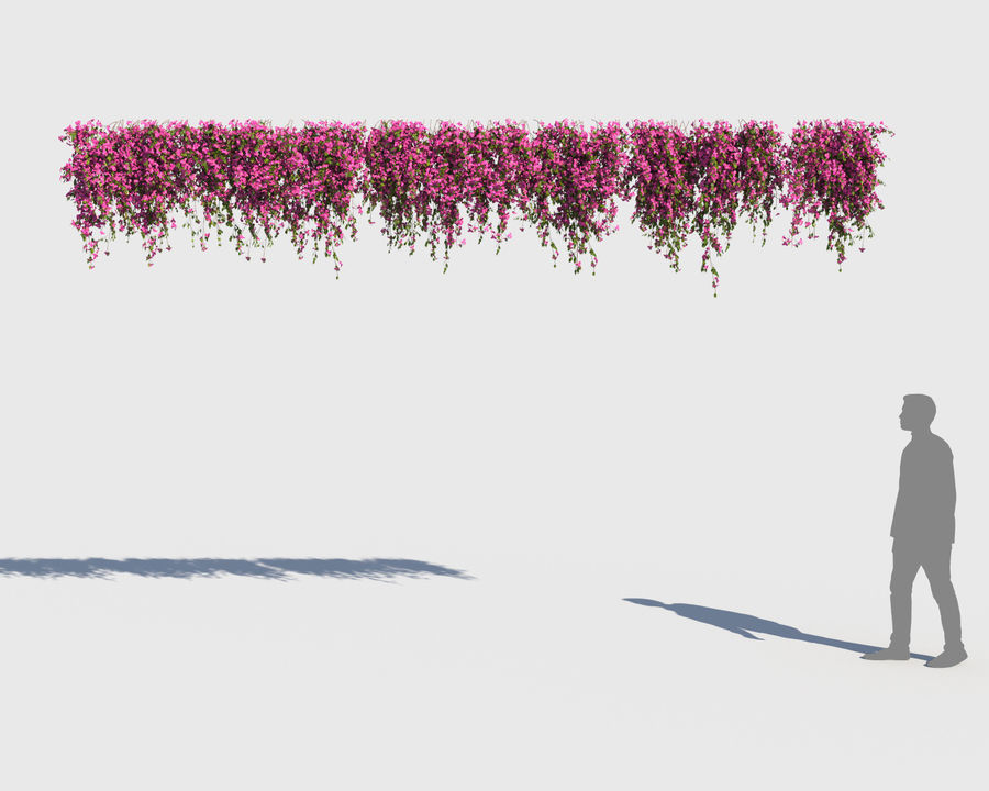 Climbing Bougainvillea Collection (+GrowFx) royalty-free 3d model - Preview no. 7