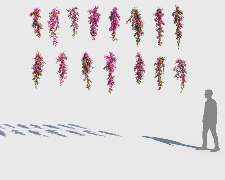Climbing Bougainvillea Collection (+GrowFx) royalty-free 3d model - Preview no. 8