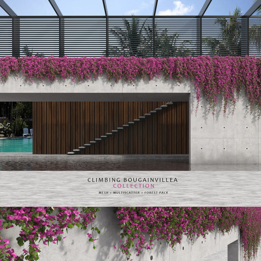 Climbing Bougainvillea Collection (+GrowFx) royalty-free 3d model - Preview no. 1