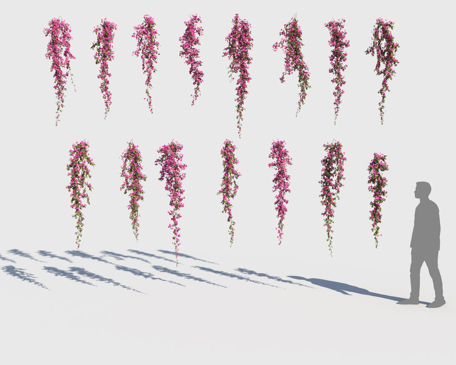 Climbing Bougainvillea Collection (+GrowFx) royalty-free 3d model - Preview no. 10