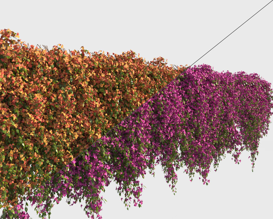 Climbing Bougainvillea Collection (+GrowFx) royalty-free 3d model - Preview no. 3