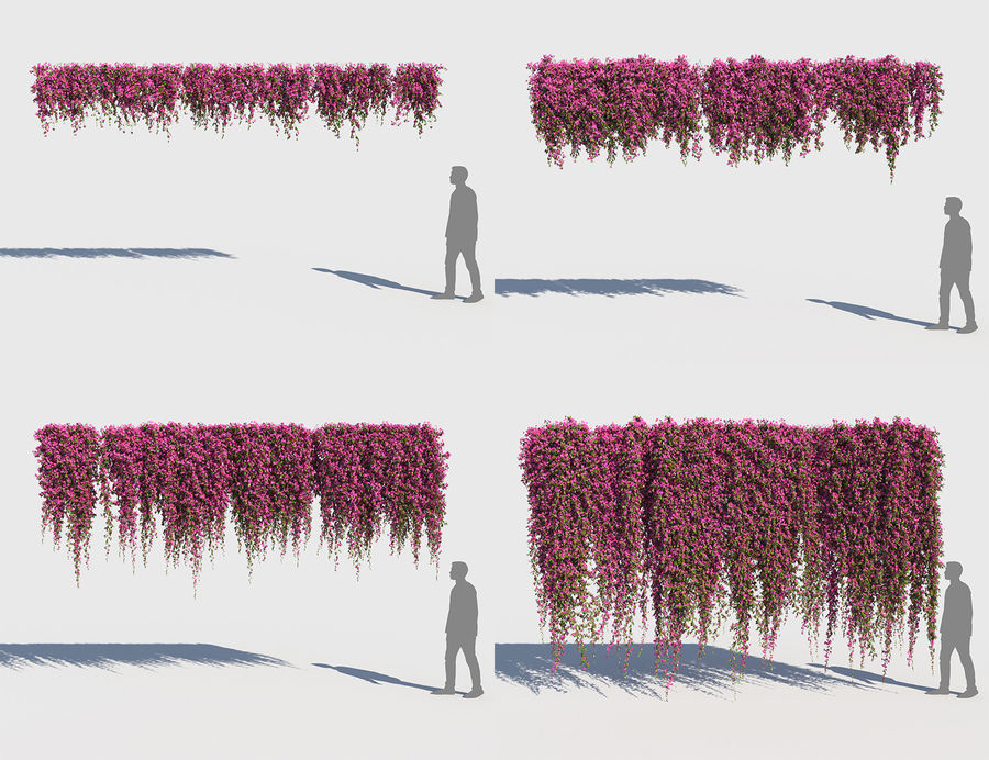 Climbing Bougainvillea Collection (+GrowFx) royalty-free 3d model - Preview no. 2