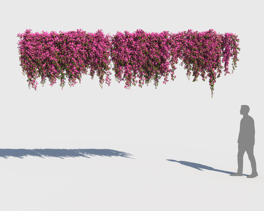 Climbing Bougainvillea Collection (+GrowFx) royalty-free 3d model - Preview no. 9