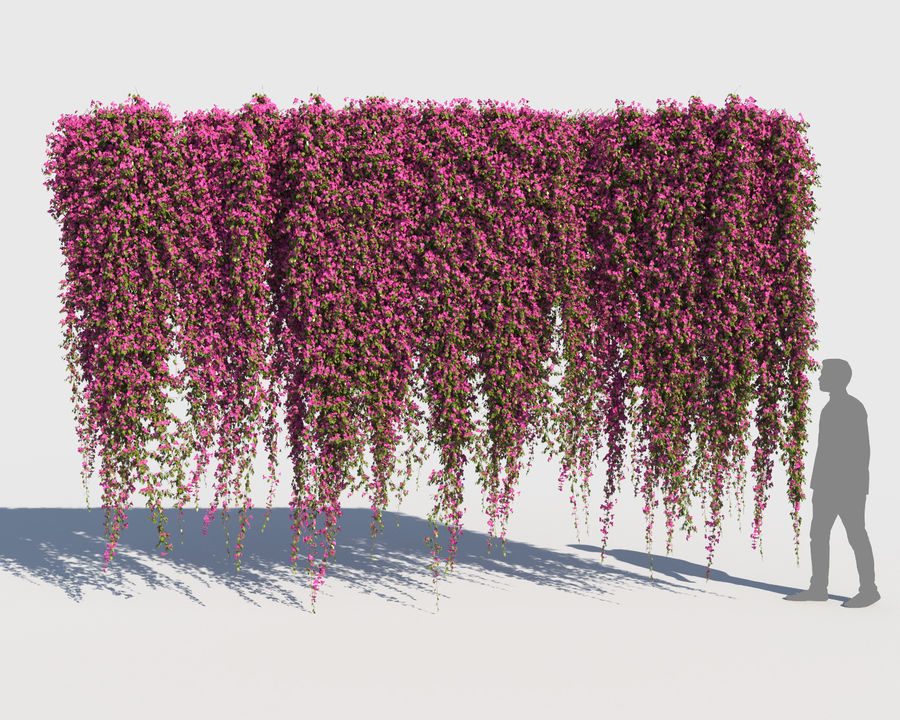 Climbing Bougainvillea Collection (+GrowFx) royalty-free 3d model - Preview no. 13