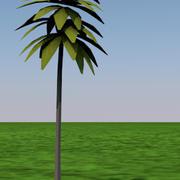 palmboom 3d model