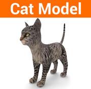 söt kattmodell låg poly 3d model