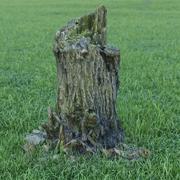 Tocón de árbol modelo 3d