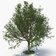Tree C 3d model