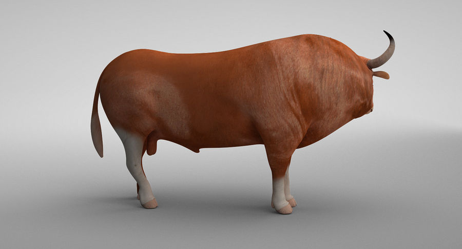 Brown Bull opgetuigd royalty-free 3d model - Preview no. 3