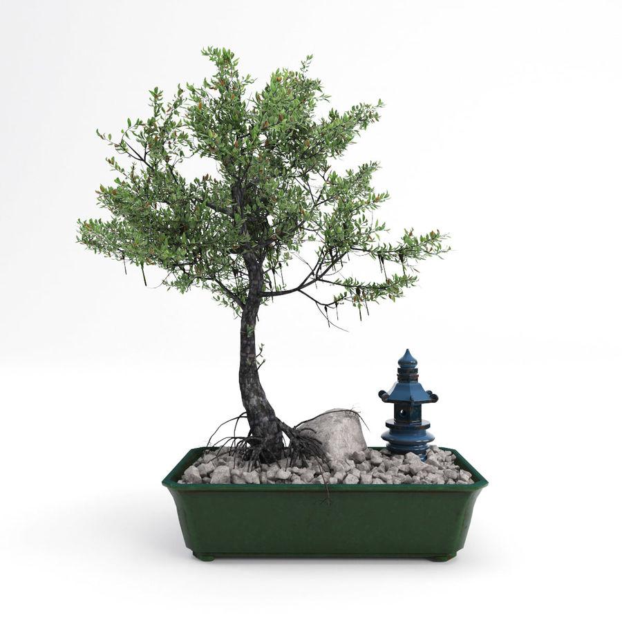 盆栽 royalty-free 3d model - Preview no. 2