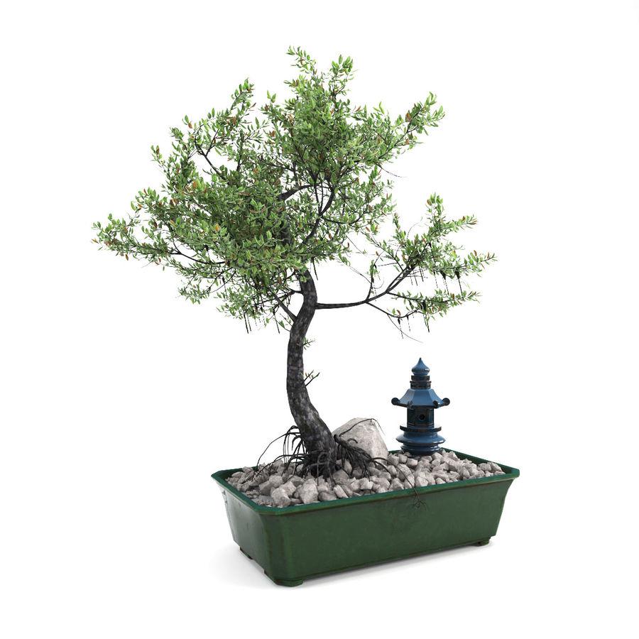 盆栽 royalty-free 3d model - Preview no. 1