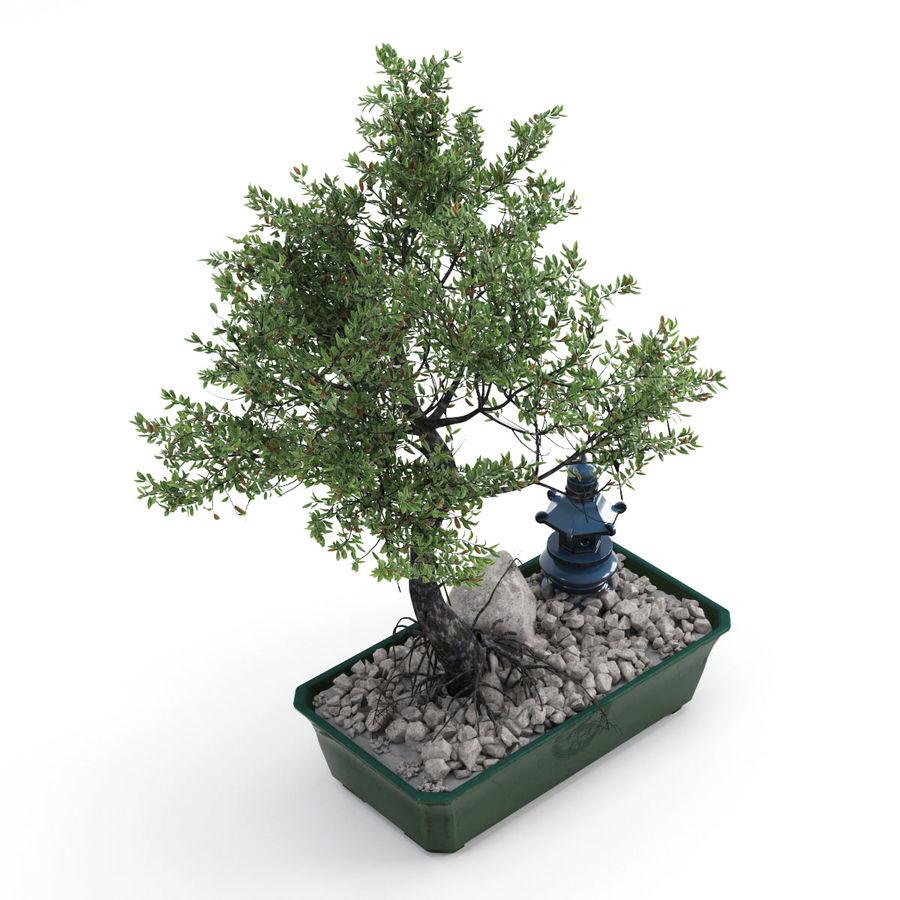 盆栽 royalty-free 3d model - Preview no. 3