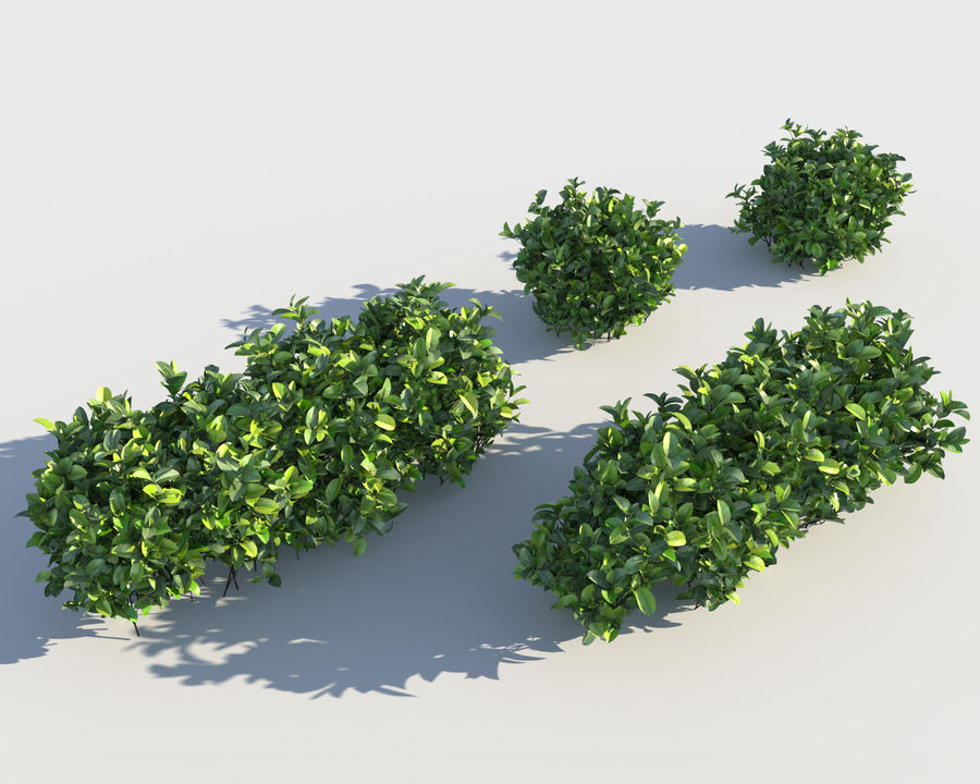 Sebes de arbustos exóticos royalty-free 3d model - Preview no. 4