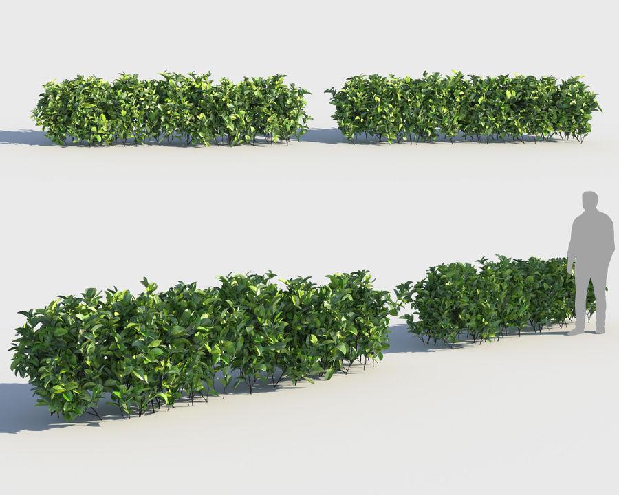 Sebes de arbustos exóticos royalty-free 3d model - Preview no. 2