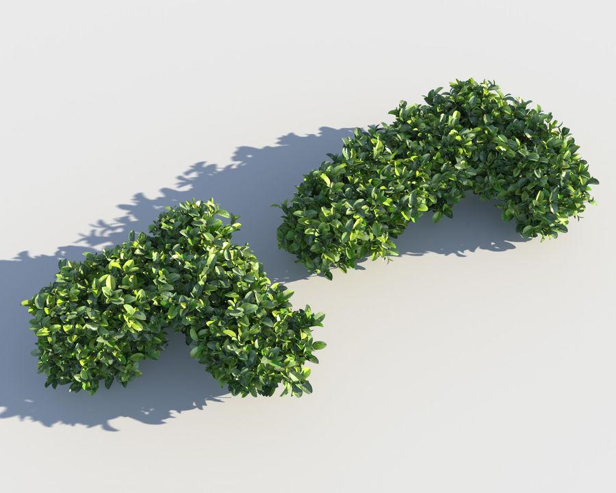 Sebes de arbustos exóticos royalty-free 3d model - Preview no. 5