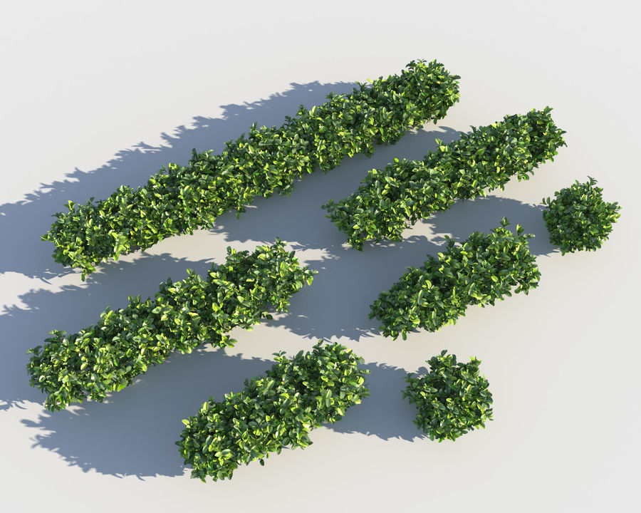 Sebes de arbustos exóticos royalty-free 3d model - Preview no. 6