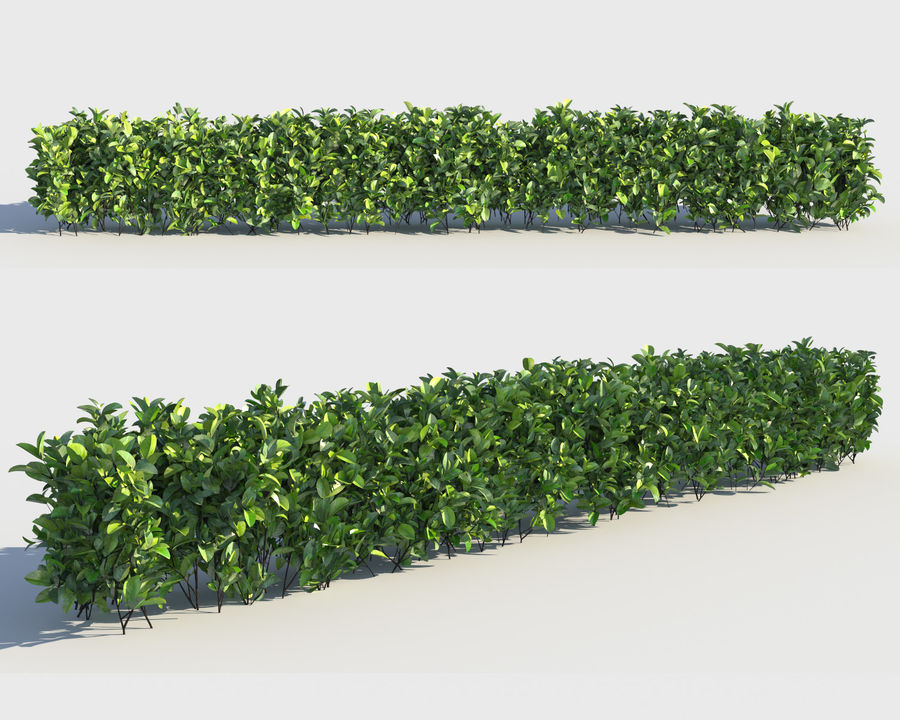 Sebes de arbustos exóticos royalty-free 3d model - Preview no. 3