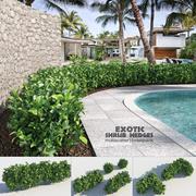 Exotic Shrub Hedges 3d model