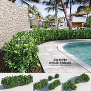 Exotic Shrub Hedges 3d model