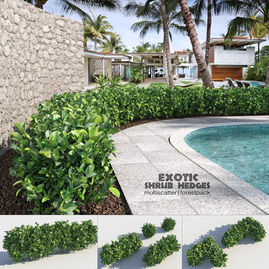 Sebes de arbustos exóticos royalty-free 3d model - Preview no. 1