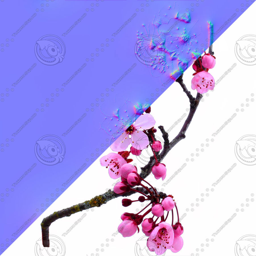 Cherry Blossom Tree royalty-free 3d model - Preview no. 5