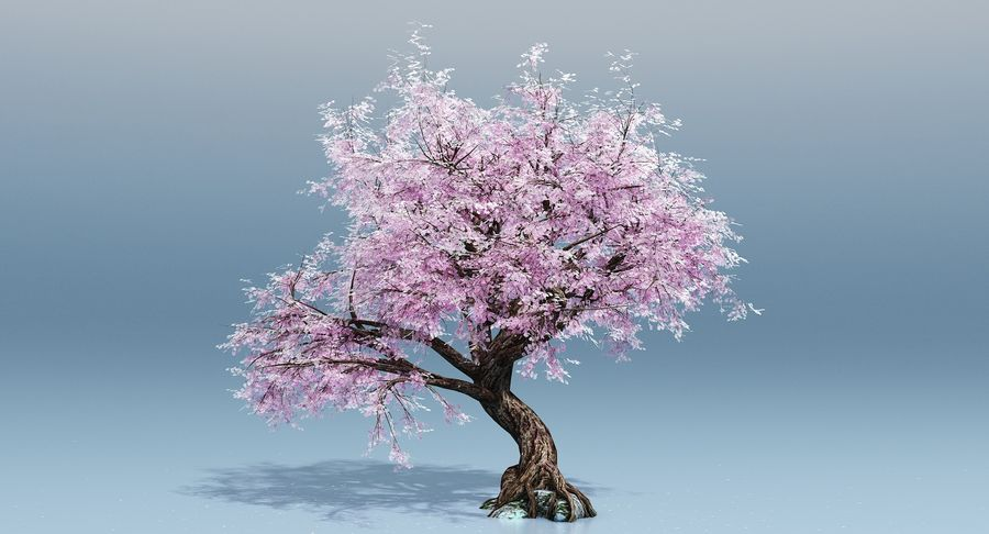 Cherry Blossom Tree royalty-free 3d model - Preview no. 1