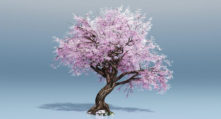 cherry blossom tree 3d model free
