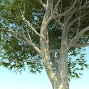 DGarch_Tree_Pack_2 3d model